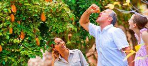 Visit Tropical Fruit World